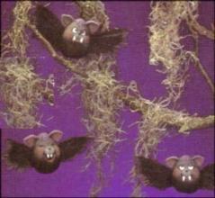 Dona 1201 bat eggs