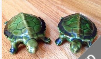 NAUGHTY TURTLES