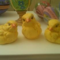 Scioto 0144 chicks (peeps) 3