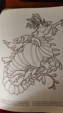 dragon drawing Leafy Sea Dragon (real)