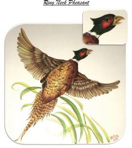 Ringneck Pheasant picture