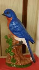 bluebird CC