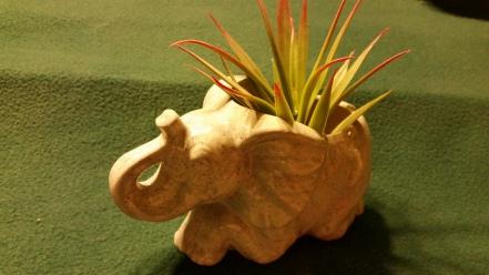 Jodi (Gare) 1900 Courtneys elephant planter