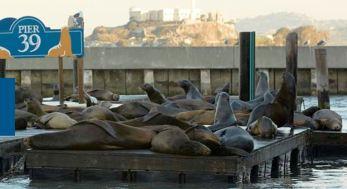 webpage sea lions