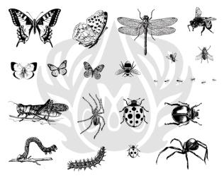 dss 013 bugs