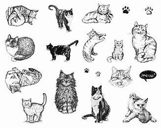dss 120 cats