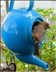 teapot birdhouse idea